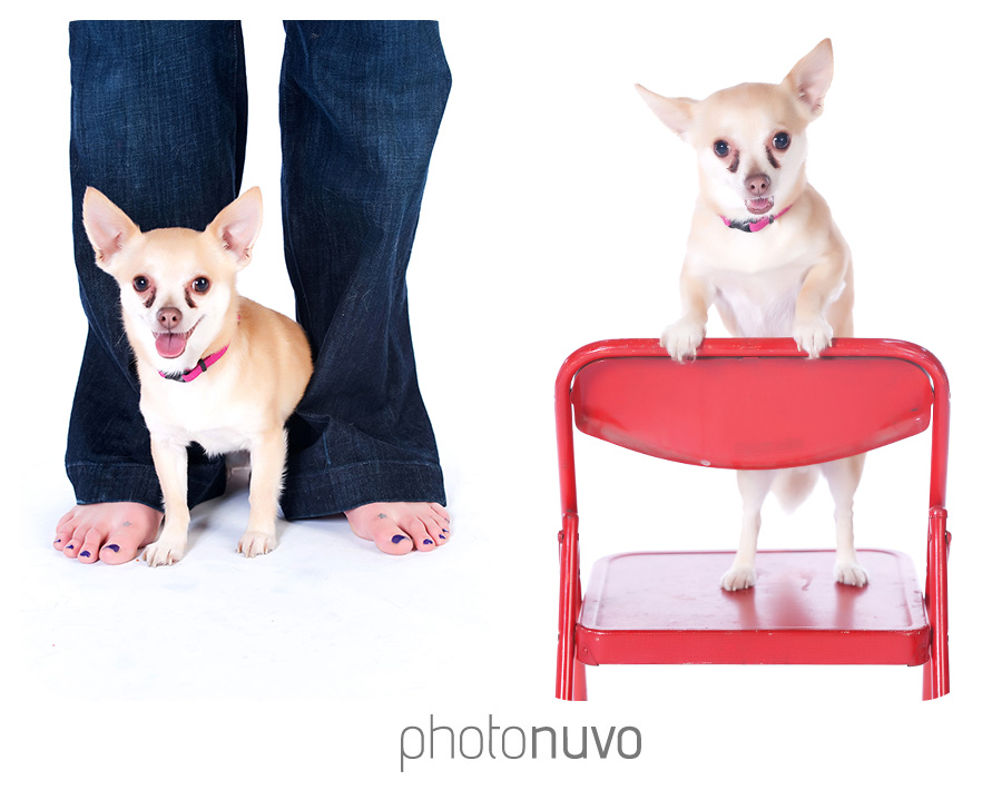 Pet-photography-dogs